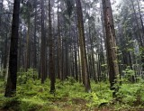 ...thru the forested highlands