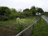 ...is another garden...