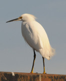 Sacramento River Delta Wildlife