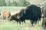 South Dakota, Mount Rushmore, Custer State Park and More...