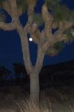 Joshua Tree National Park, - Scenes