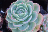 Desert Blooms & Succulents