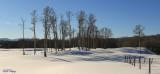Snowy Fields.jpg