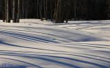 Snow shadows4.jpg