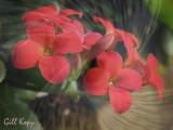 Flowers textured.jpg