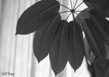 Leaf Umbrella.jpg
