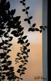 Evening hanger.jpg