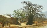 Baobab shamba.jpg