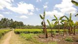 Farm nr Mbeya.jpg