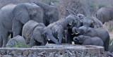 Elephants thirsty.jpg