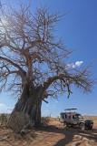 Under the baobab.jpg