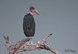 The Birds of Ruaha