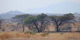 African trees2.jpg