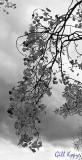 Stormy Leaves.jpg