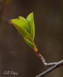 New leaves.jpg