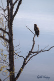 Eaglet3.jpg