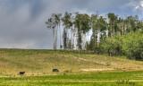 Vanderhoof farm.jpg