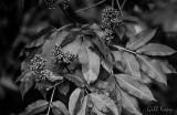 Berries and Leaves.jpg