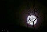 Extra Super moon.jpg