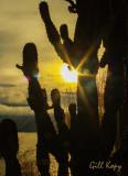 Winter cactus.jpg