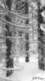 Snowy trees2.jpg