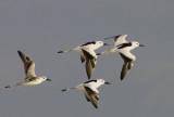 Birds 2015 Oman