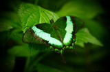 Butterfly_Fotor.jpg