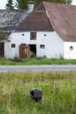 Ribe, 0V4E1900.02-09-2011.jpg