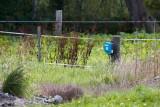 M30, Skast, Bredebro, 0V4E2084.08-09-2011.jpg