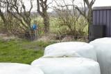 M65D, Ribe, IMG_8944 19-04-2012.jpg