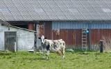 Ribe, 0V4E8087 19-04-2012.jpg