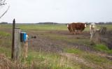 M45, Mandø, IMG_8976 20-04-2012.jpg