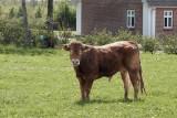 Skjern, IMG_9407 13-05-2012.jpg