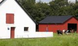 M45, Havredal, Karup, IMG_9842 04-08-2012.jpg