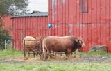 M30, Højer, IMG_0672 05-10-2012.jpg