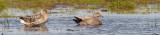 Knarand, CR6F687121-05-2012.jpg