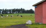 Grærup, IMG_633609-09-2011.jpg