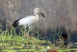 Fugle, Goa, Indien