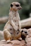 Mama und ihr Junges