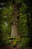 Im Urwald Sababurg