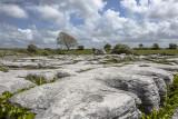 Burren, beim Poulnabrone Dolmen