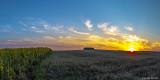 Sundown am Sonnenblumenfeld