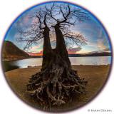 Der Taucherbaum
