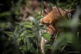 Vorsichtiger, aber neugieriger Blick aus dem sicheren Versteck