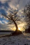 Der Taucherbaum am Edersee