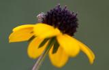tiny spider 2.JPG