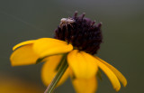 tiny spider 1.JPG