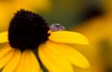 tiny spider 6.JPG