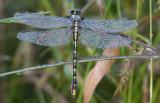 dew on dragonfly.jpg