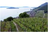 Le vignoble de Twann et l'île St Pierre